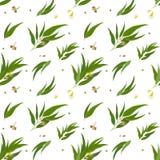 Modèle sans couture avec des feuilles d'eucalyptus, graines et illustration stock