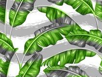 Modèle sans couture avec des feuilles de banane Image de feuillage tropical décoratif Photos libres de droits