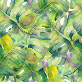 Modèle sans couture avec des feuilles de monstre illustration stock