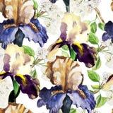 Modèle sans couture avec des fleurs d'aquarelle iris Photographie stock
