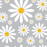 Modèle sans couture avec des fleurs de camomille sur Grey Background Beautiful Floral Ornament Images stock