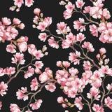 Modèle sans couture avec des fleurs de cerisier Illustration d'aquarelle Photos stock