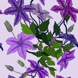 Modèle sans couture avec des fleurs de clématite Photo libre de droits