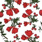 Modèle sans couture avec des fleurs de grenade Photo stock