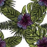 Modèle sans couture avec des fleurs de ketmie Photographie stock