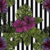 Modèle sans couture avec des fleurs de ketmie Image stock