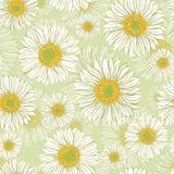 Modèle sans couture avec des fleurs de marguerite Illustration de Vecteur