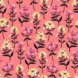 Modèle sans couture avec des fleurs de phlox dans le rose Images stock