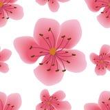 Modèle sans couture avec des fleurs de Sakura Images stock