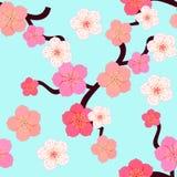 Modèle sans couture avec des fleurs du Japonais des cerises sur le ciel Image stock