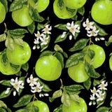 Modèle sans couture avec des fruits, des agrumes et des fleurs de pamplemousse i illustration libre de droits