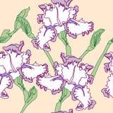 Modèle sans couture avec des iris Photos stock