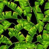 Modèle sans couture avec des palmettes de banane Feuillage tropical décoratif illustration libre de droits