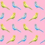 Modèle sans couture avec des perroquets de perruche Image libre de droits