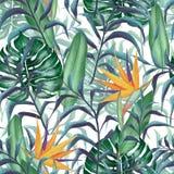 Modèle sans couture avec des plantes tropicales illustration stock