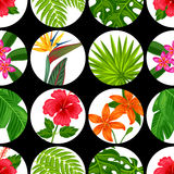Modèle sans couture avec des plantes tropicales, des feuilles et des fleurs Fond fait sans masque de coupage Facile à utiliser po Photographie stock