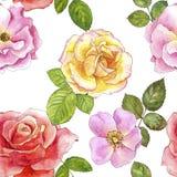 Modèle sans couture avec des roses de dessin d'aquarelle Images stock