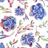 Modèle sans couture avec des succulents de bleu d'aquarelle Photo libre de droits