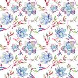 Modèle sans couture avec des succulents de bleu d'aquarelle Photographie stock