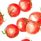 Modèle sans couture avec des tomates de dessin d'aquarelle Image libre de droits
