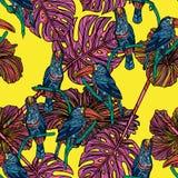 Modèle sans couture avec des toucans Photo stock