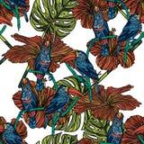 Modèle sans couture avec des toucans Photos libres de droits