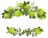 Modèle sans couture avec des tranches et des fleurs d'agrume dans le vecteur photos libres de droits