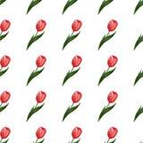 Modèle sans couture avec des tulipes Images stock
