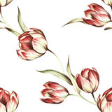 Modèle sans couture avec des tulipes Illustration d'aquarelle d'aspiration de main Photo libre de droits