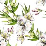 Modèle sans couture avec l'alstroemeria Illustration d'aquarelle d'aspiration de main Photos stock