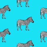Modèle sans couture avec l'illustration tirée par la main de vecteur de zèbre Image libre de droits