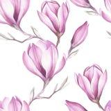 Modèle sans couture avec la brindille de floraison de magnolia Illustration d'aquarelle Photographie stock libre de droits
