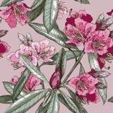Modèle sans couture avec la fleur d'oléandre Image libre de droits