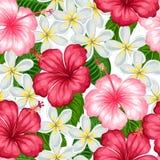 Modèle sans couture avec la ketmie tropicale et le plumeria de fleurs Fond fait sans masque de coupage Facile à utiliser Photo libre de droits