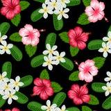 Modèle sans couture avec la ketmie tropicale et le plumeria de fleurs Fond fait sans masque de coupage Facile à utiliser Image stock