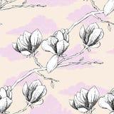 Modèle sans couture avec la magnolia Photographie stock