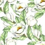 Modèle sans couture avec la magnolia Illustration d'aquarelle d'aspiration de main Photo libre de droits