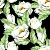Modèle sans couture avec la magnolia Illustration d'aquarelle d'aspiration de main Images libres de droits