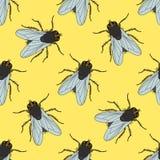 Modèle sans couture avec la mouche Domestica de Musca Tiré par la main mouche Vecteur Photos stock