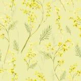 Modèle sans couture avec le brin d'aquarelle de la mimosa Photographie stock