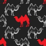 Modèle sans couture avec le chameau Illustration Libre de Droits