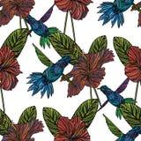 Modèle sans couture avec le colibri Images libres de droits