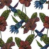 Modèle sans couture avec le colibri illustration stock