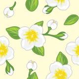 Modèle sans couture avec le jasmin de floraison photographie stock libre de droits