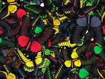 Modèle sans couture avec le sort de différents butterflys Photos stock