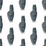 Modèle sans couture avec les alpaga mignons Illustration Stock