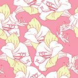Modèle sans couture avec les amaryllis blanches Photo libre de droits