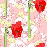 Modèle sans couture avec les amaryllis blanches rouges Images libres de droits