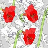 Modèle sans couture avec les amaryllis grises rouges Images libres de droits