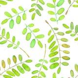 Modèle sans couture avec les branches d'arbre vertes d'acacia d'aquarelle Image stock